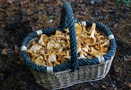 Chanty-basket-2011-DW-S