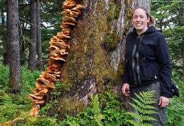 Laetiporus conifericola Kate Mohat Girdwood DW S