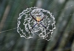 Spider weird net Masha Cr S
