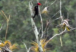 Woodpecker Rio Claro Ms