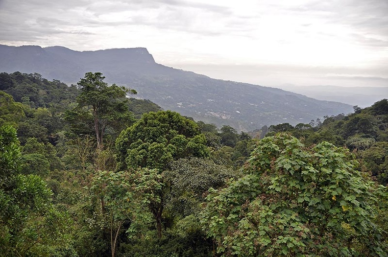 Chicaque forest slope from loadge Ms.jpg