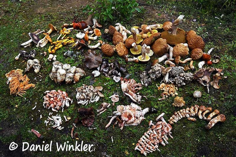 Mushroom collection Shinkhar Road all DW Ms.jpg