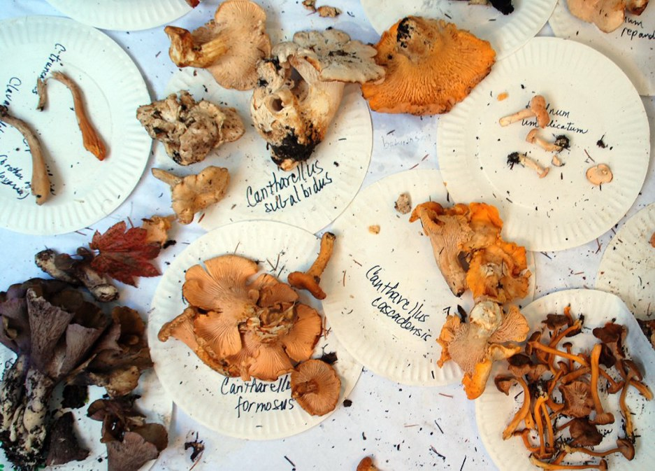 Find your fungi: foraging in astoria & warrenton.