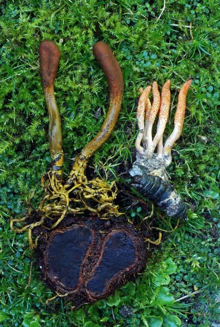 Baikal herbalist kenőcs pikkelysömörhöz gyógyszer pikkelysömörhöz a lábakon