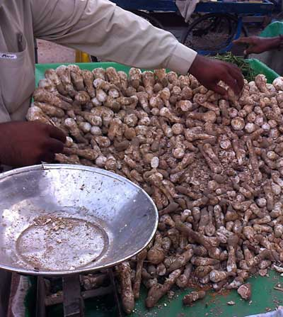 Podaxis pistillaris on market in Umerkot Sindh